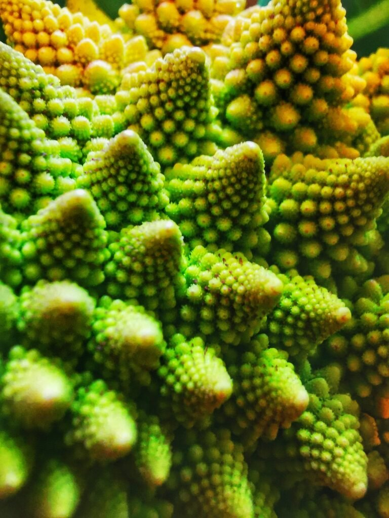 Natural fractals patterns